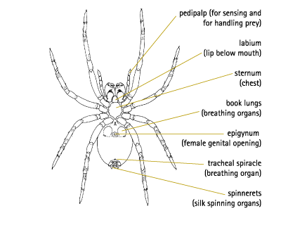 Main Electrical Panel besides یراق آلات further Parts Of A Tarantula Spider additionally Add A Battery Kit   120A as well Kitchen Electrical. on wiring diagram for house